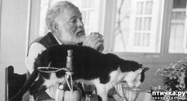 фото 19: Жизнь кошек во времена Советского Союза. Давайте вспоминать.