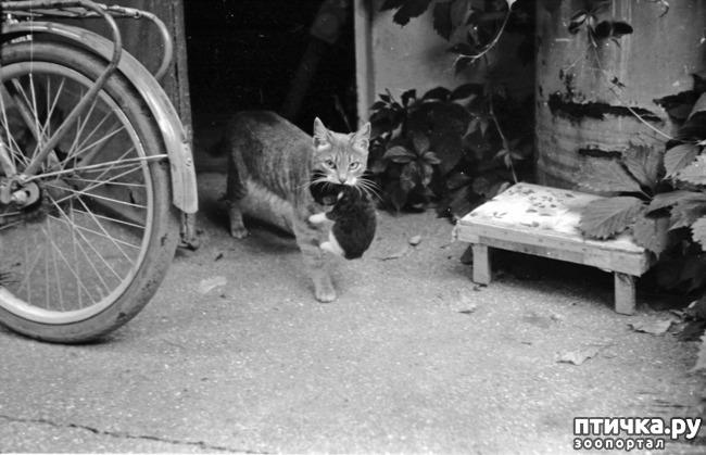 фото 20: Жизнь кошек во времена Советского Союза. Давайте вспоминать.