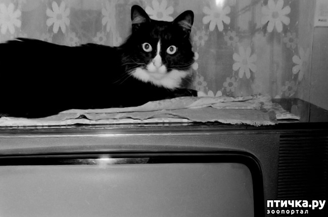 фото 21: Жизнь кошек во времена Советского Союза. Давайте вспоминать.