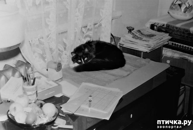 фото 22: Жизнь кошек во времена Советского Союза. Давайте вспоминать.
