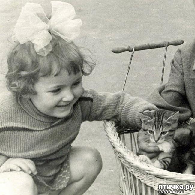 фото 23: Жизнь кошек во времена Советского Союза. Давайте вспоминать.