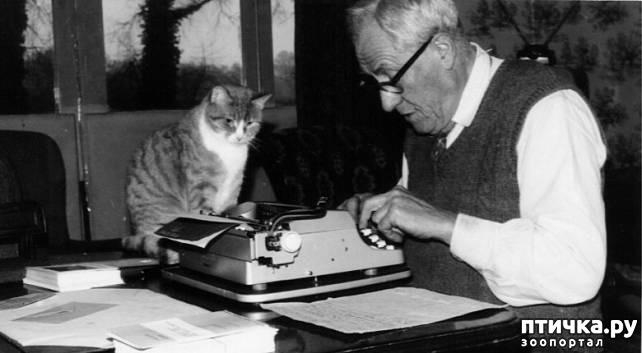 фото 24: Жизнь кошек во времена Советского Союза. Давайте вспоминать.