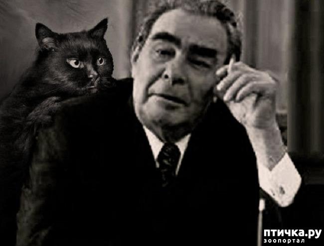 фото 26: Жизнь кошек во времена Советского Союза. Давайте вспоминать.