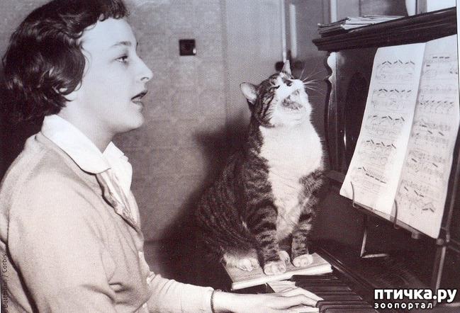 фото 27: Жизнь кошек во времена Советского Союза. Давайте вспоминать.