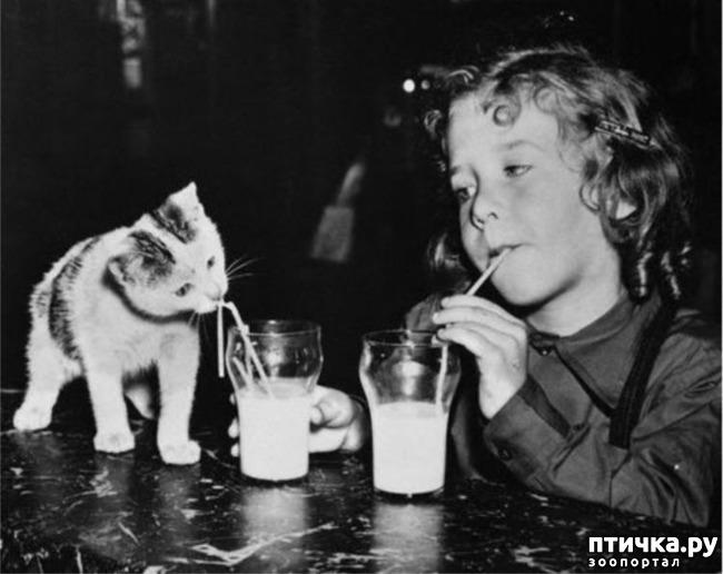 фото 28: Жизнь кошек во времена Советского Союза. Давайте вспоминать.