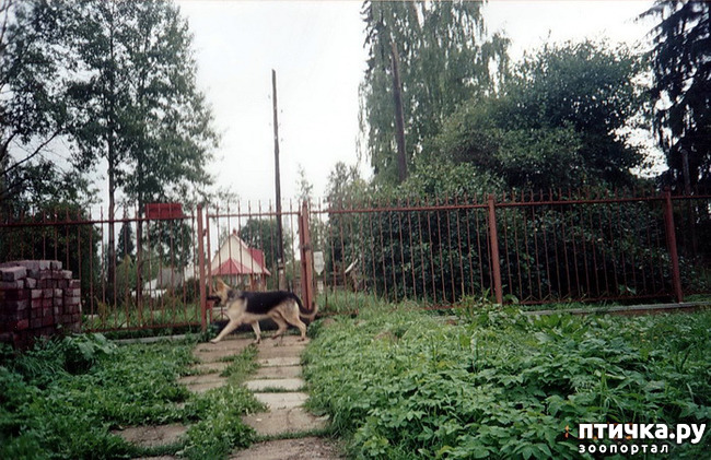 фото 18: Старые фото, 2006-2008г. г.