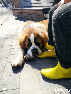фото: Про жёлтый сапог