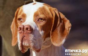 фото: Редкие породы собак: каталбурун