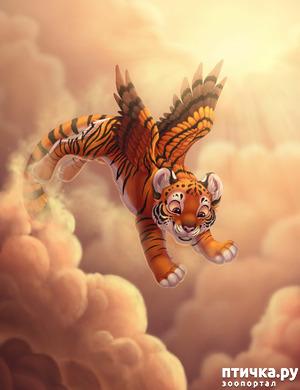 фото: Тигр