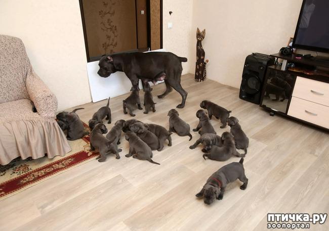 фото 36: Мамы разные нужны, мамы всякие важны...