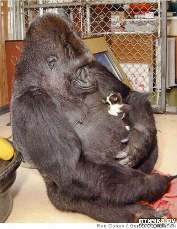 фото 32: Мамы разные нужны, мамы всякие важны...