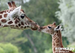 фото: Мамы разные нужны, мамы всякие важны...