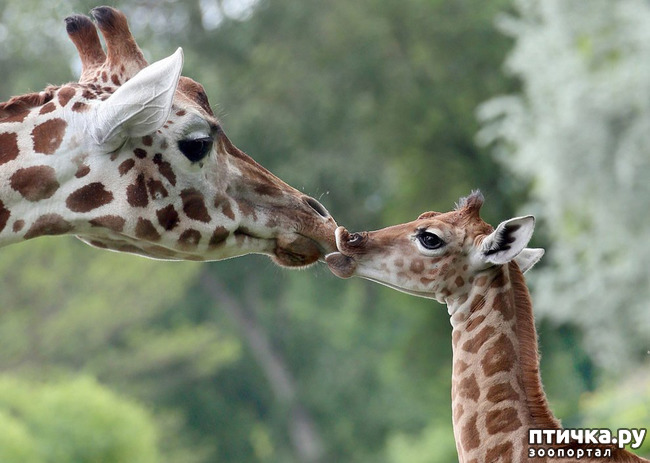 фото 1: Мамы разные нужны, мамы всякие важны...