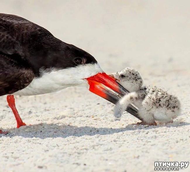 фото 2: Мамы разные нужны, мамы всякие важны...