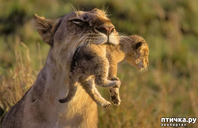 фото 3: Мамы разные нужны, мамы всякие важны...