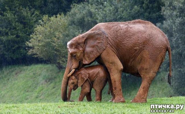 фото 5: Мамы разные нужны, мамы всякие важны...