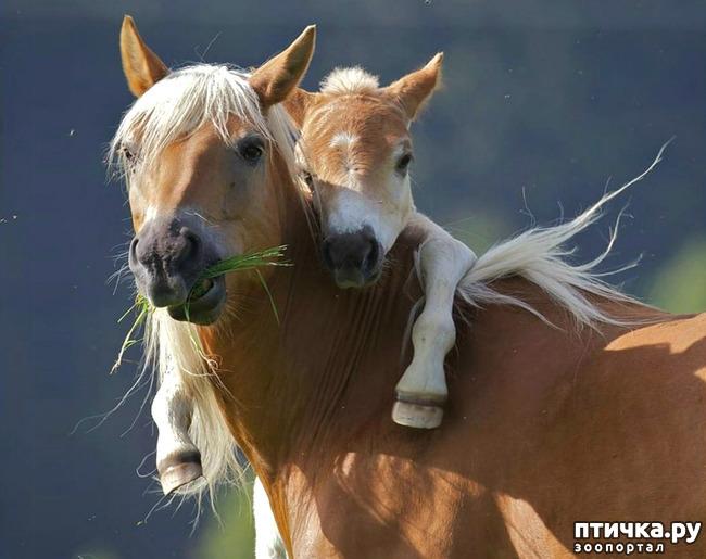 фото 6: Мамы разные нужны, мамы всякие важны...