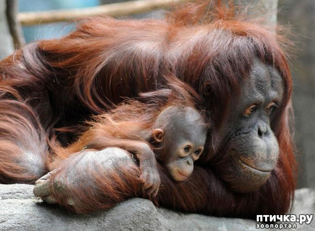 фото 10: Мамы разные нужны, мамы всякие важны...