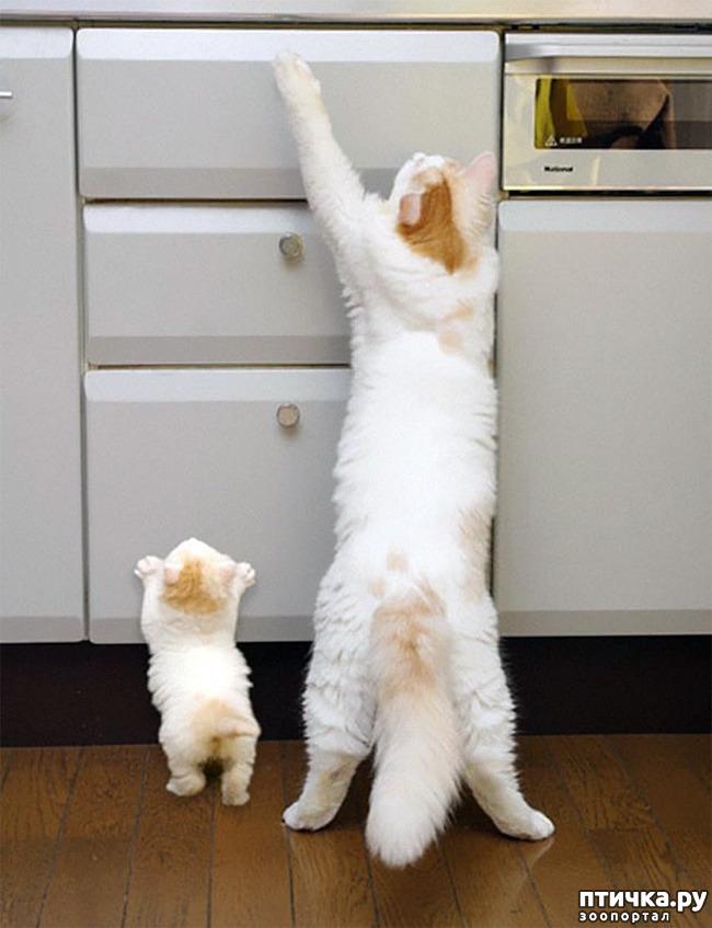 фото 11: Мамы разные нужны, мамы всякие важны...