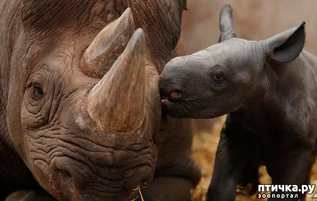фото 12: Мамы разные нужны, мамы всякие важны...