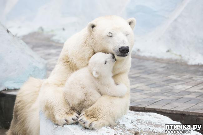 фото 13: Мамы разные нужны, мамы всякие важны...