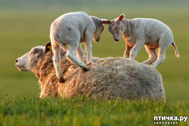 фото 14: Мамы разные нужны, мамы всякие важны...