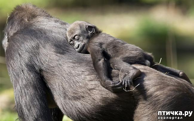 фото 16: Мамы разные нужны, мамы всякие важны...