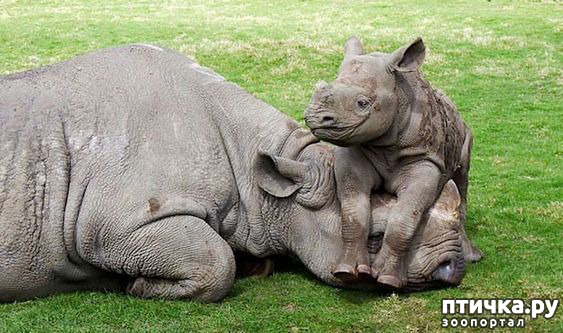 фото 18: Мамы разные нужны, мамы всякие важны...