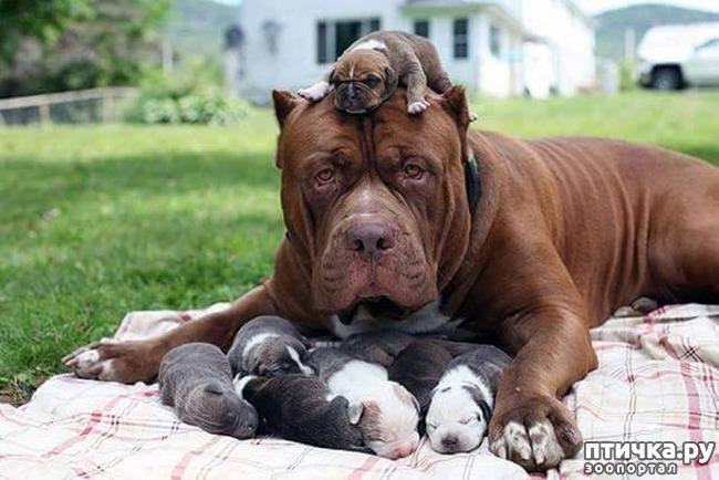 фото 19: Мамы разные нужны, мамы всякие важны...
