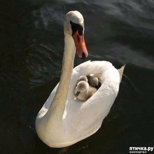 фото 21: Мамы разные нужны, мамы всякие важны...