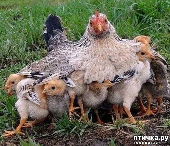 фото 26: Мамы разные нужны, мамы всякие важны...
