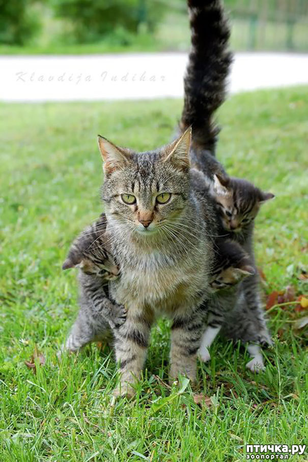 фото 29: Мамы разные нужны, мамы всякие важны...