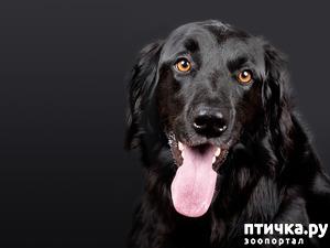 фото: День чёрной собаки.