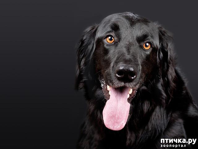 фото 1: День чёрной собаки.