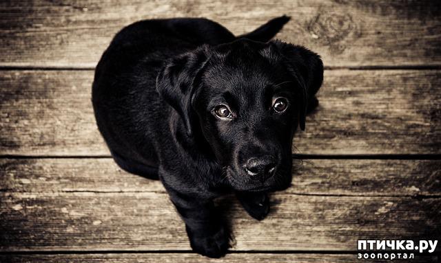 фото 2: День чёрной собаки.