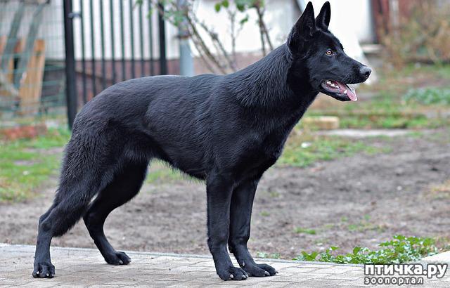 фото 3: День чёрной собаки.