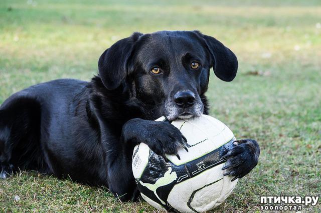 фото 4: День чёрной собаки.