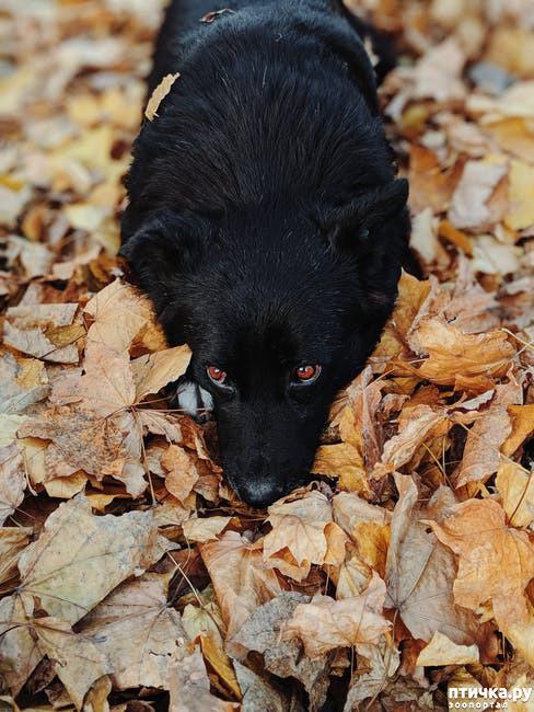фото 5: День чёрной собаки.