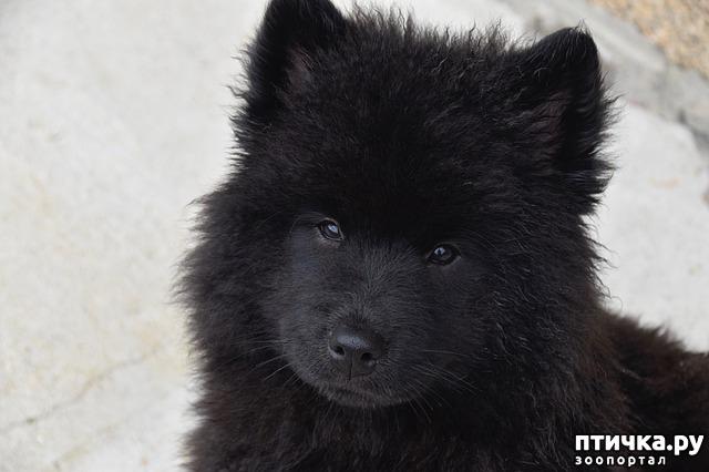 фото 8: День чёрной собаки.
