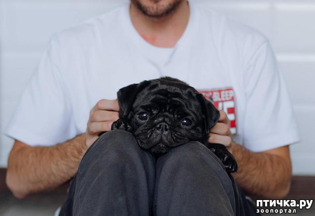 фото 9: День чёрной собаки.