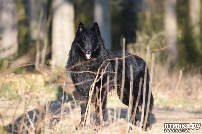 фото 10: День чёрной собаки.