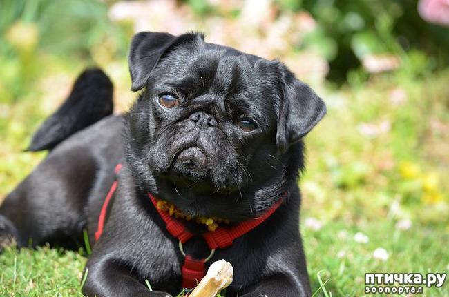 фото 11: День чёрной собаки.