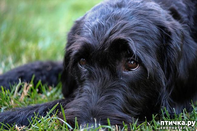 фото 13: День чёрной собаки.