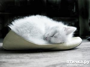 фото: Снежная туфелька и её история