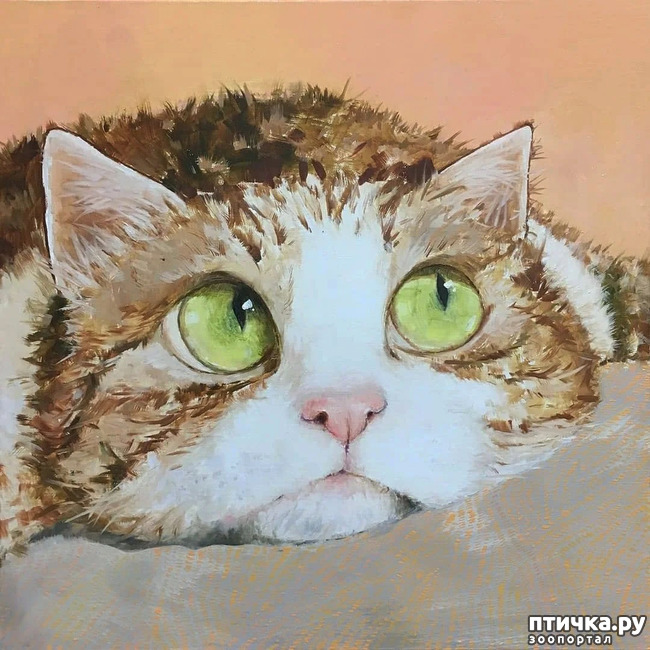 фото 18: Котики от Люси и Галины
