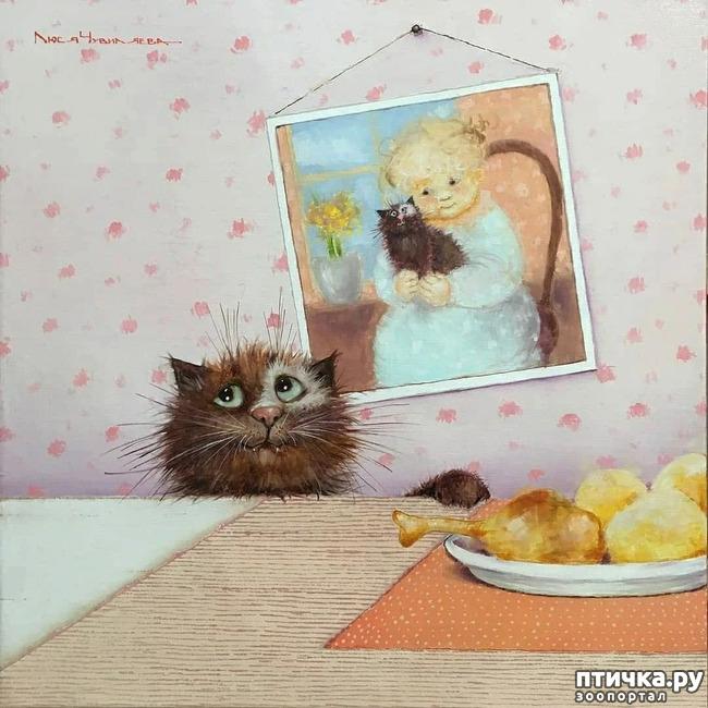 фото 19: Котики от Люси и Галины