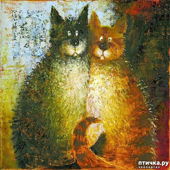 фото 28: Котики от Люси и Галины