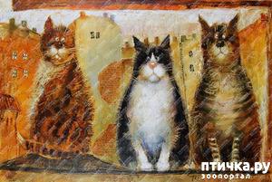 фото: Котики от Люси и Галины