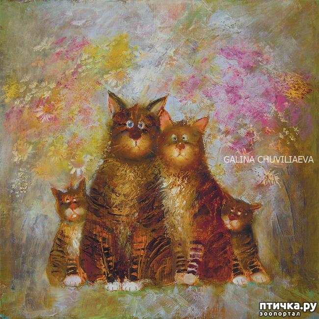 фото 9: Котики от Люси и Галины