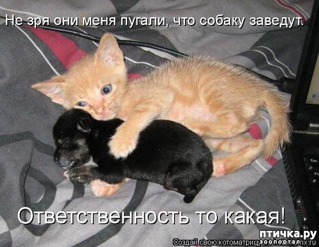 фото 20: Смешные собаки: номер неизвестен